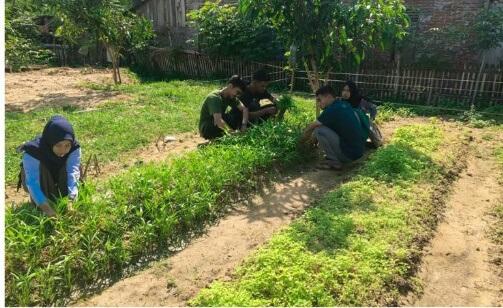 https://news.unimal.ac.id/index/single/2268/mahasiswa-kkn-k36-budidaya-tanaman-hortikultura-di-lahan-tak-terpakai